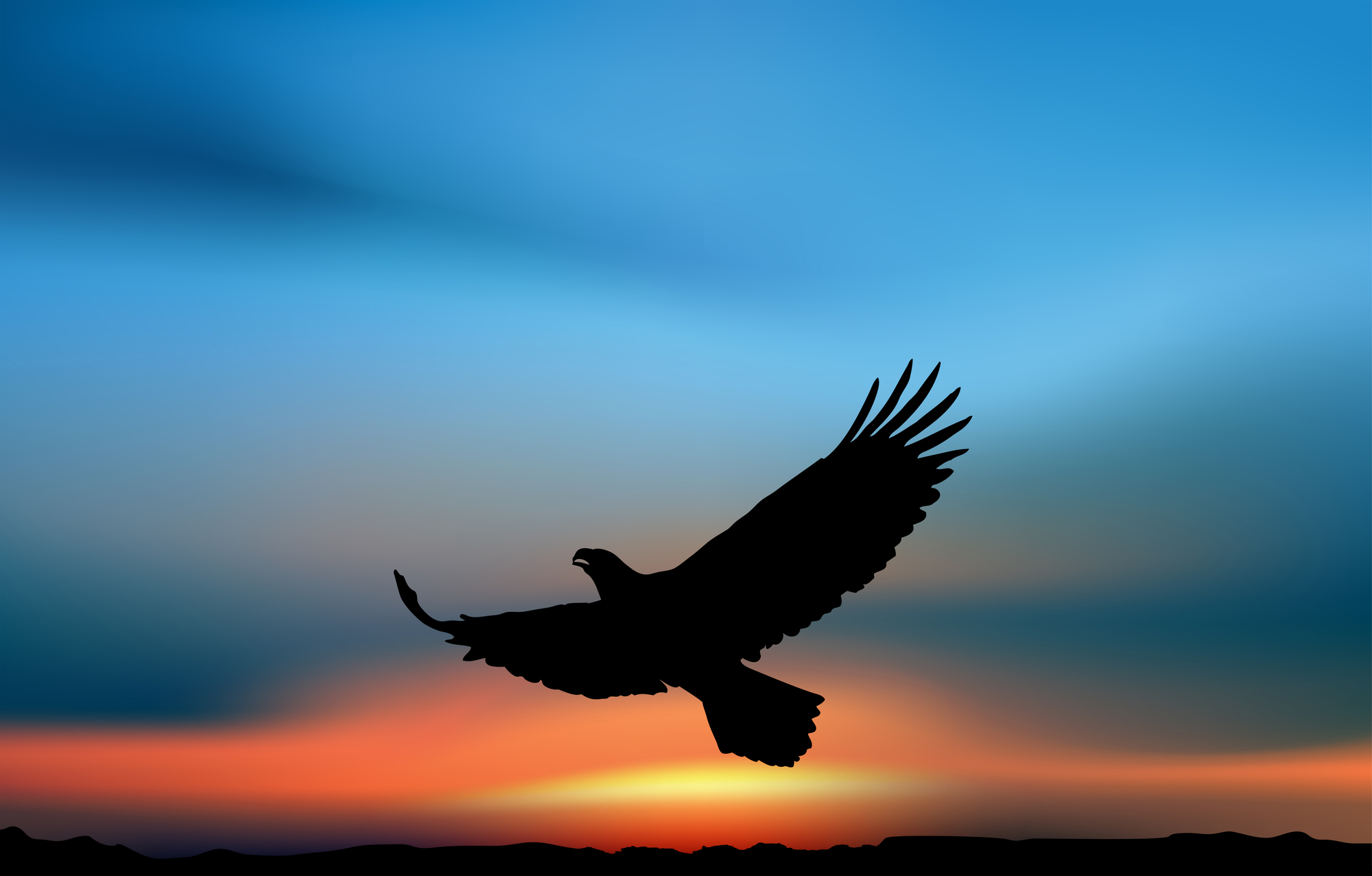 Flying eagle in the sunset